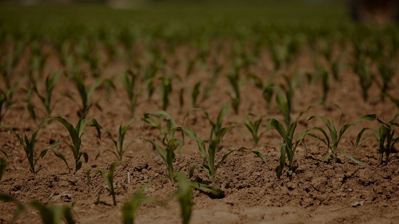 Proyecto de la Secretaría de Agricultura de Honduras apoyado por el IICA impulsará mejoras en la inocuidad de los alimentos de este país y Belice