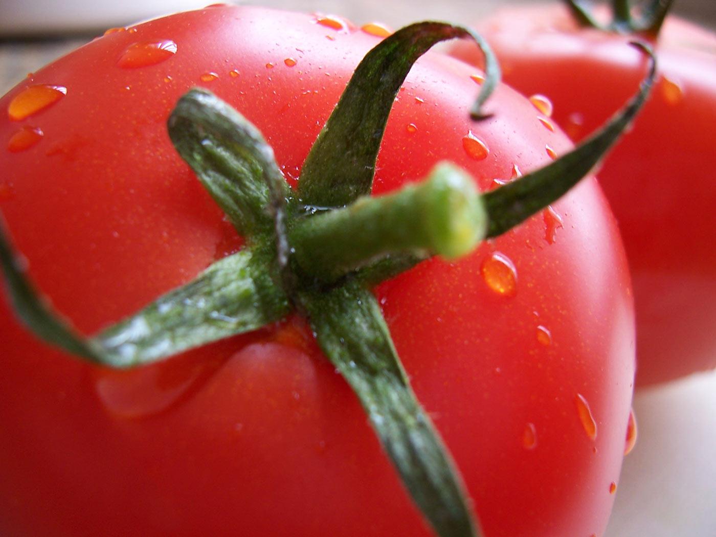 Innovación Tecnológica en Tomate Industrial Cultivar IDIAP T-9