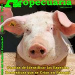 Revista Actualidad Agropecuaria - Edición  Junio 2019