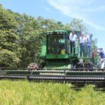 No habrá importación de arroz