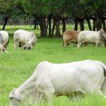 Niveles Estacionales de Se y Co en Pastos de Áreas Ganaderas de la Provincia de Chiriquí