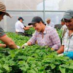 Actores del sector cafetalero de Centroamérica estudian técnicas