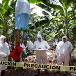 FAO inicia un programa para prevenir una enfermedad
