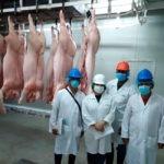 Gobierno inicia compra de cerdos para el Plan Panamá Solidario