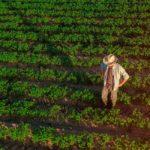 Consejo Asesor del IICA para la Seguridad Alimentaria pide foco en la pequeña producción para enfrentar al Covid-19