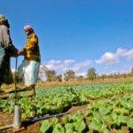 La FAO se asocia con el Fondo de Adaptación para ayudar a los países vulnerables a combatir el impacto del cambio climático
