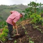 Unión Europea e IICA ayudan a mitigar los problemas de inseguridad alimentaria y nutricional ocasionados por covid-19 en el sector cafetalero de Centroamérica