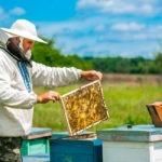 PROCAGICA respalda la apicultura en las zonas cafetaleras de El Salvador