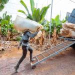 Comité de Agricultura de la OMC analiza seguros, paquetes de estímulos y medidas sobre comercio agrícola