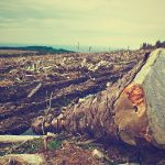 El Fondo Verde para el Clima aprueba US $ 28 millones para ayudar a Colombia a combatir la deforestación en la Amazonía