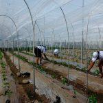 Ex-camaroneras desarrollan proyecto de producción agrícola