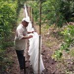 Impulsa a Pequeños Productores de El Salvador a Diversificar Ingresos