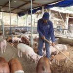 Porcicultores de México Replantean Estrategias para Impulsar el Consumo de Proteína Animal por Coronavirus