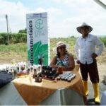 Aceite de piñón, una oportunidad para el medio ambiente