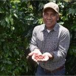 Nuevas prácticas de manejo de cafetales y plantas de café benefician a pequeños productores hondureños