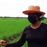 IDIAP capacita a técnicos agropecuarios en el manejo del cultivo arroz en Coclé