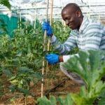 Países del Caribe trabajarán junto al IICA para desarrollar una agricultura resiliente