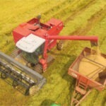 Productores de arroz recibieron más de B/. 57 millones