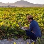 El camino hacia prácticas agrícolas sostenibles en América Latina y el Caribe