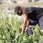 Argentina y el IICA ponen en marcha proyecto conjunto para impulsar el desarrollo agrícola y social en el Caribe