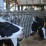Tecnología al servicio de la ganadería impulsa resultados en Uruguay